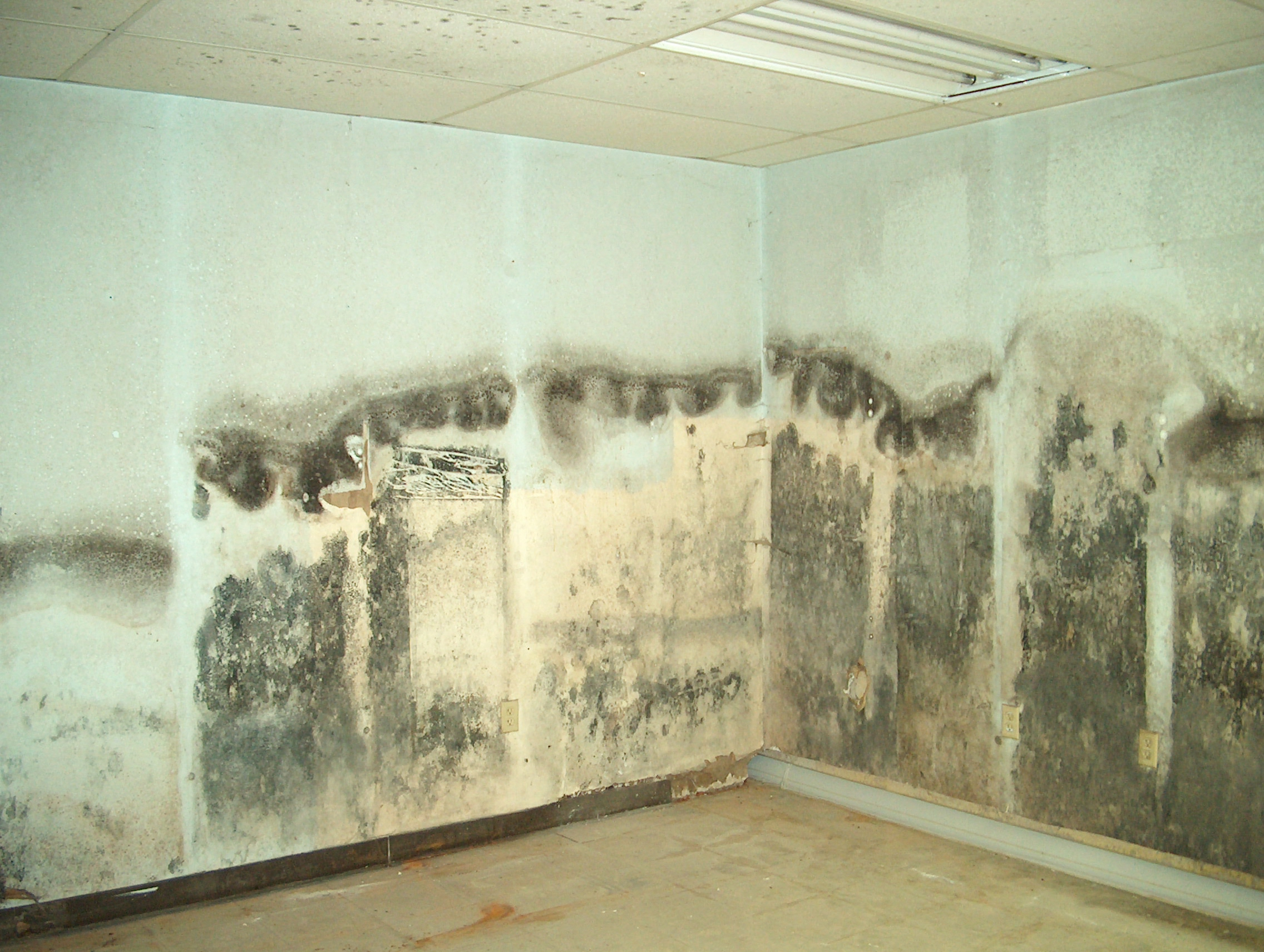Black mold inspection cost - Above Is Penicillin Mold
