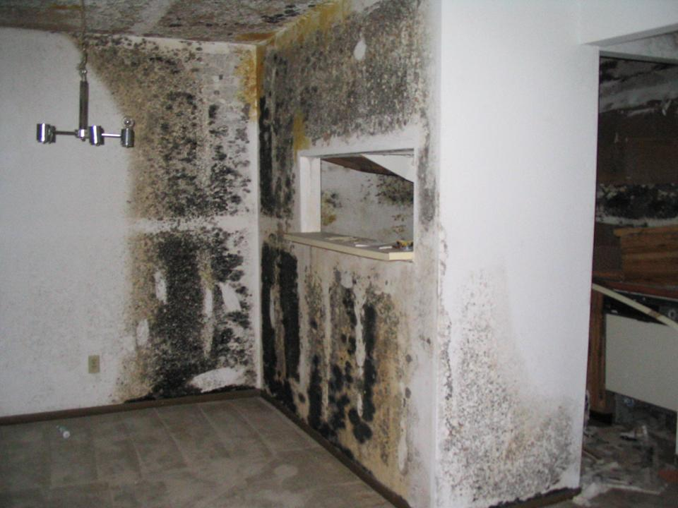 Black Mold In Walls types of mold | mold remediation information