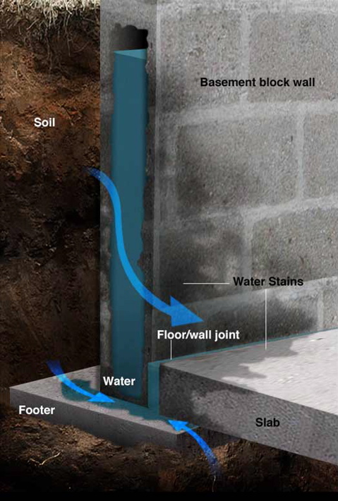 How Does A Basement Flood Mold Remediation Information